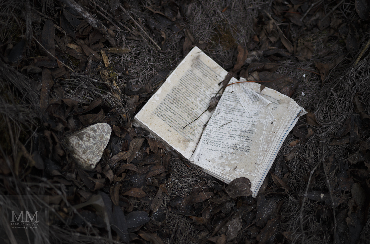 Large format, fine art photograph of book in autumn leaves. Martin Mojzis.